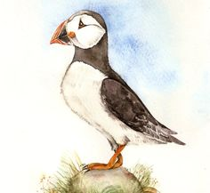 Puffin On A Rock - Art Print of watercolor painting 8x10 BIrd, Nursery, baby shower, cottage, nature art, wildlife