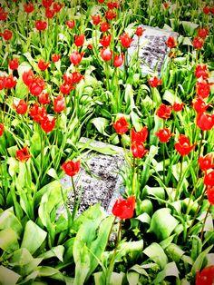 Violet Cemetery, Osceola, Ar