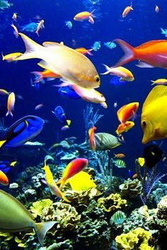 A kaleidoscope of color under the sea.