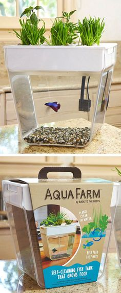 Self-Cleaning Fish Tank That Grows Food / TechNews24h.com