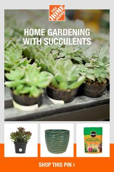 Explore ways to incorporate succulents into your home with products from The Home Depot. If you're a gardener without much room or time to care for plants, then succulents are a great option for you. Plant them in your backyard garden or house them inside in containers; either way, succulents from The Home Depot will keep your garden or home interesting and fun. Click to get started.