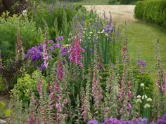 I invited the wild foxgloves into our garden, and they really decided to stay! They're still welcome, but I weed out a few more now than then! :) Photo: 2008-06-12
