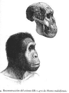 Homo rudolfensis Homo Habilis, Biological Anthropology, Forensic Anthropology, Bigfoot Sasquatch, Early Humans, Fiction Stories, Human Evolution, Forensics, Historical Fiction