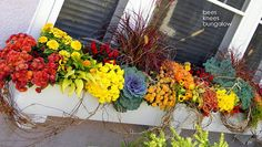 {Bees Knees Bungalow} Fall Window Box - I like the grapevine in with the yellow and orange and red Fall Window Boxes, Window Box Flowers, Flower Boxes, Container Plants, Container Gardening, Urban Gardening, Bonsai, Fall Containers, Window Planter Boxes
