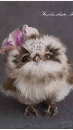 car sez: Do all baby girl owls wear head ornaments or did you get that on your way down from the nest?