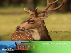 Muthanga wildlife sanctuary, Kerala by God's Own Kerala via slideshare