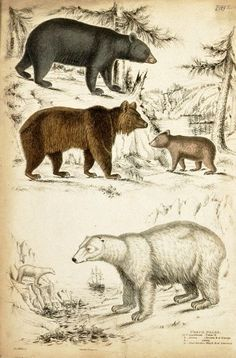 Animal - Bear - Educational plate