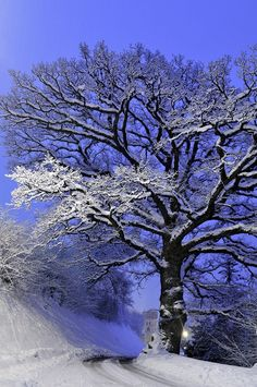 Winter frosting