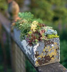 Garden Therapy: Hearty Plants For The Black Of Thumb