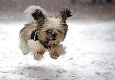 Cute Puppy - First Romp in the Snow