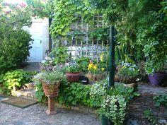 courtyard gardens : Courtyard gardening