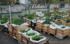 Huertos Urbanos orgánicos en azoteas. Bahía de Cádiz Growing Veggies, Small Space Gardening, Rooftop Garden, Balcony Garden, Wood Crates, Amazing Gardens, Container Gardening, Gardening Tips, Organic Gardening