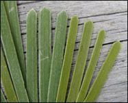 weaving a flax fantail step 28