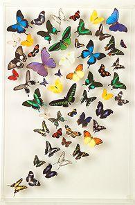 The elegant art of exotic butterflies.