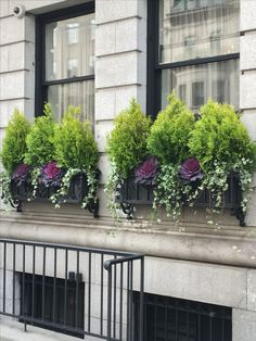 Untitled Untitled - New Ideas Plants For Planters, Window Planters, Fall Planters, Flower Planters, Outdoor Plants, Outdoor Gardens, Window Box Flowers, Balcony Flowers, Container Flowers