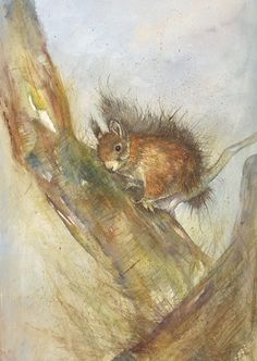 Torquay Art Gallery showing a wide range of original artwork from a huge range of renowned and less known artists. Squirrel Illustration, Illustration Art, Drawing Animals, Animal Drawings, Watercolour, Watercolor Paintings, Squirrel Art, Insect Art, Small Animals