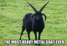 Death Metal Goat Meme | Slapcaption.com