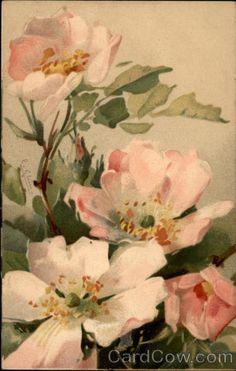 Pink Roses C. Klein. Vintage postcard.