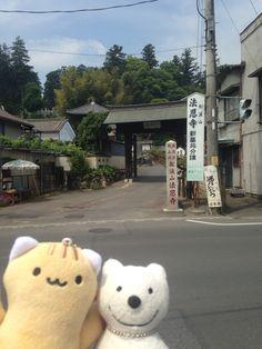 クマ散歩:越生に品行方正なクマ出没 The Bear took a walk around Ogose!♪☆(^O^)/  #越生 #品行方正 #Bear