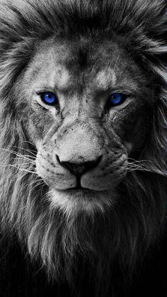 Gambar Singa Hitam Putih : gambar, singa, hitam, putih, Singa, Ideas, Singa,, Haiwan,, Haiwan, Peliharaan