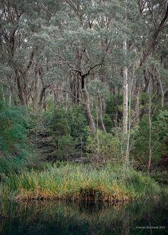 Blackheath NSW Australia Landscape Photos, Landscapes, Country Roads, Australia, Plants, Scenery, Paisajes, Landscape Photography, Plant