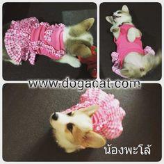นองพะโล ใสชดเสอสนขชดเดรสเอยมตกตาสชมพ นารกมากๆคะ ine : dogacatthailand  www.dogacat.com FB : dogacat  Fanpage : dogacatthailand Instagram : dogacat  #dogacat #reviewdogacat #เสอผาหมา #เสอสนข #เสอหมา #เสอผาสนข #เสอแมว #เสอผาแมว #แวนตาสนข #รองเทาสนข #puppyclothes #petstagram #puppy #petclothes #petsofinstagram #dogstagram #dogoftheday #dogdress #dogdaily #dogapparel #dogclothes #dogcute  #dogshoes #doghat #chihuahua #shihtsulovers #shihtzu #shihtsugram #ปลอกคอสนข #หมวกสนข by dogacat…