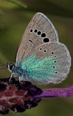 Butterfly http://www.kelebek-turk.com