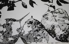 Photogram//nature. Selective development.