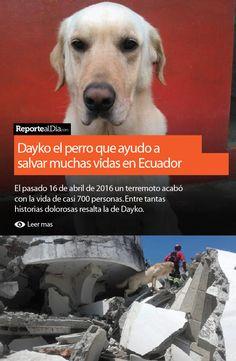 Conoce la historia de Dayko el perro que ayudo a salvar muchas vidas en Ecuador y su trágico final.  #Dayko #Ecuador #terremoto #earthquake #perros #mascota #dog