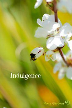 Gardens, Inspirational, Words, Plants, Image, Outdoor Gardens, Plant, Horse, Garden