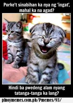 I just farted funny cute animals cats animal kittens kitten funny quotes funny animals