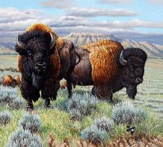 """Return Of A Monarch"" by Cynthie Fisher ~ North American Big Game ~ bison"