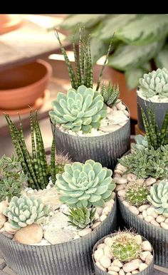 garden for beginners Types of Succulents amp; How to Care It for Beginners room interior 23 Types of Succulents amp; How to Care It for Beginners - Best Job, Best Choice Cactus Flower, Plants, Container Plants, Succulents, Succulent Terrarium, Tiny Plants, Succulent Gardening, Plant Decor, Container Gardening
