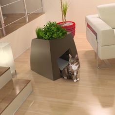 My cat would go crazy for a house like this with a little grass or catnip planted on top!