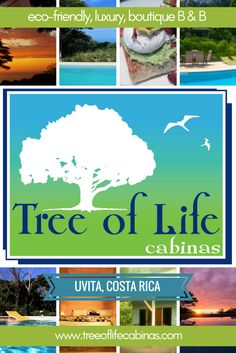 Tree of Life Cabinas | Uvita, Costa Rica