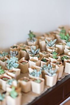 Succulent wedding favors of all shapes and sizes. #weddingfavors #succulents #weddingchicks Captured By: Rodeo & Co Photography ---> http://www.weddingchicks.com/2014/04/28/reveal-your-babys-gender-with-this-cute-wedding-idea/