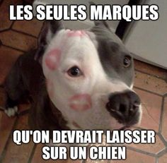 So true, love my pit bull! I Love Dogs, Puppy Love, Cute Dogs, Awesome Dogs, Animals And Pets, Funny Animals, Cute Animals, Baby Animals, Funny Babies