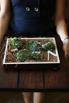 succulent corsages - wonderful!