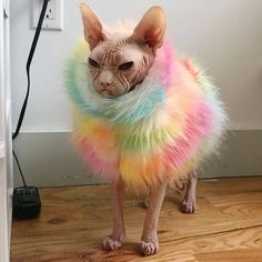 Sphynx cat is a special breed of cats that constantly need warmth. I present to you 15 warm clothes for Sphynx cats. Funny Animal Memes, Cute Funny Animals, Cat Memes, Funny Dogs, Cute Cats, Funny Memes, Hilarious Sayings, 9gag Funny, Animal Quotes