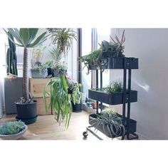 エアプランツ/植物/IKEA/NO GREEN NO LIFEのインテリア実例 - 2014-03-09 10:03:24 | RoomClip(ルームクリップ)