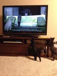 ネコを見る猫。