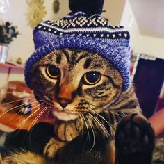 Human, I know you said I look cute in this hat, but would you please take it off me now! Submitted by: Pamela Cook Shafer #catlife #catsinhats #whatcatsthink #catoftheday #catlover #cutecat #pawfection #catlady #catblogger #TGIF #friday