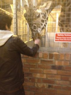 You wanted a picture of Zayn feeding a giraffe? Well I happen to have a picture of Zayn feeding a giraffe. Just for you.