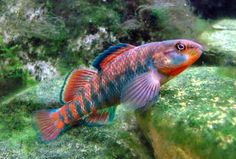 What fish do you think is the most beautiful of all?