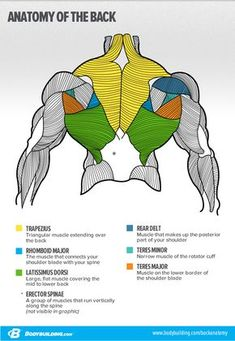 8 Things To Never Do On Back Day – What you can't see in the mirror can hurt you! Just check our list of mistakes you should never make when training back. fitness motivation, Source by unfinishedsuccess Human Anatomy Drawing, Human Body Anatomy, Muscle Anatomy, Anatomy Study, Anatomy Art, Anatomy Reference, Drawing Reference, Pose Reference, Drawing Tips