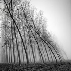 by Pierre Pellegrini  - Water and wind the force of nature