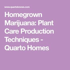 Homegrown Marijuana: Plant Care Production Techniques - Quarto Homes