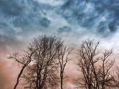 Winter Trees Dreamscape Photograph