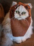 Dare we say Geeky Cat > Grumpy Cat??