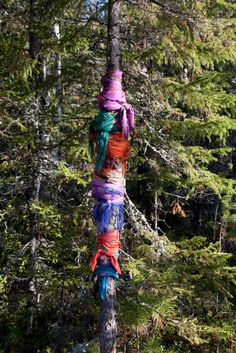 at a khanty graveyard in a forest, headscarves of women who have died are tied around a tree yamal, western siberia, russia | foto: bryan & cherry alexander